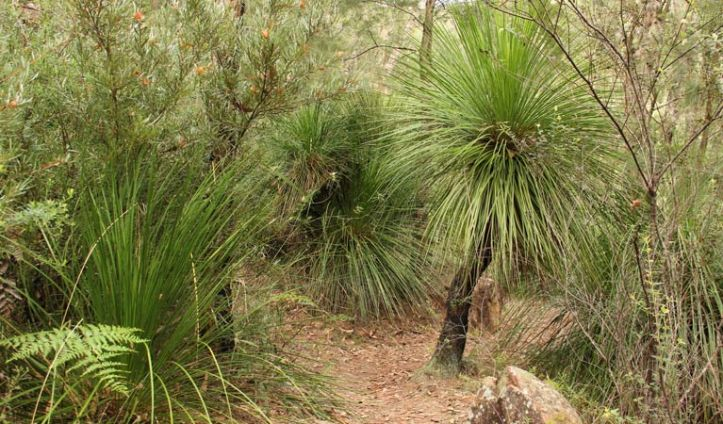 grass-tree-circuit-01