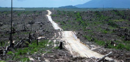 deforestation-palm_0